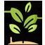 Indigo Plant: Used as a Local Cure